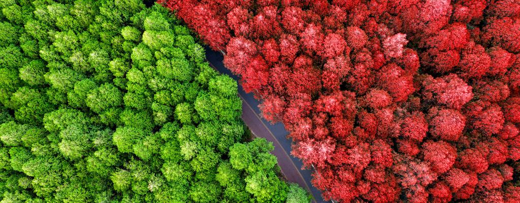 红绿封面.jpg